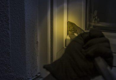 Wohnungseinbrüche im Landkreis