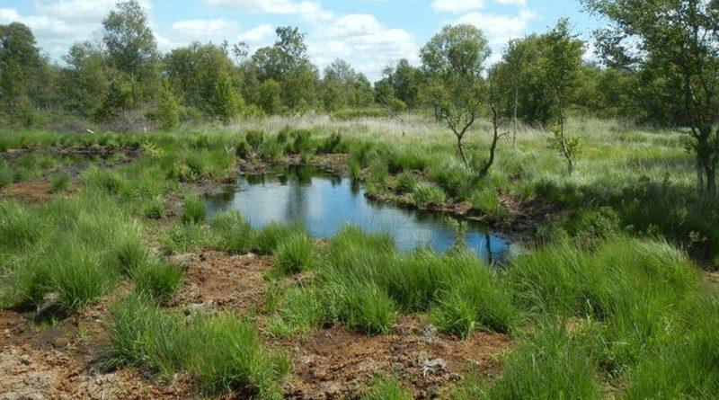 Klimaschutz durch Moorentwicklung in Naturschutzgebieten