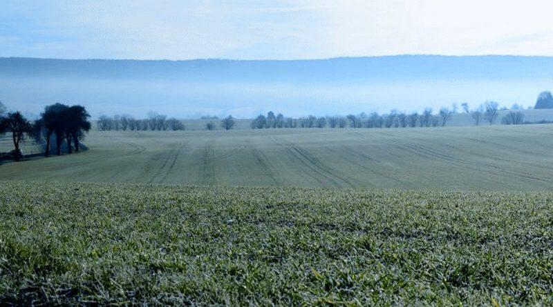 Auf den Feldern stehen die Zeichen auf Frühling – Jetzt darf kein starker Frost mehr kommen